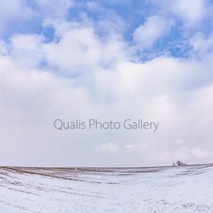 雪魅せる冬のカタチ・・・