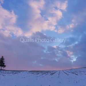 美瑛・穏やかな冬の黄昏・・・