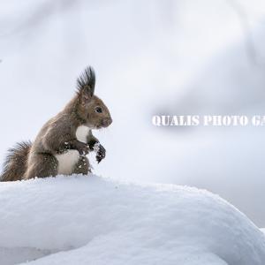 雪遊び・・・