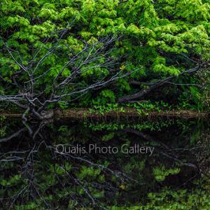 静かな緑の呼吸・・・