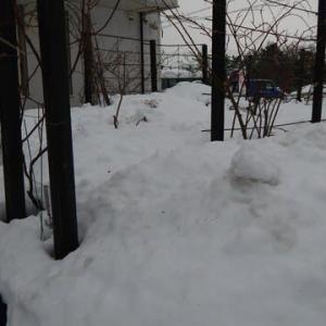 大雪でしたが少し緩み始めました