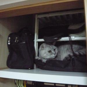猫の収納術