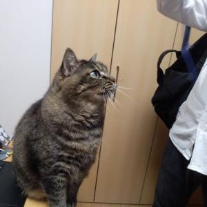 あ、猫がいる~