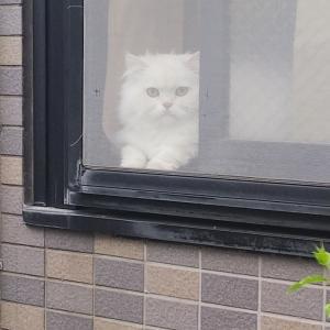 外を見たいんじゃ