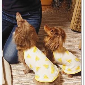 黄色スイカ服、手直し後
