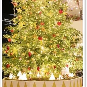 シーズン唯一のクリスマスツリー