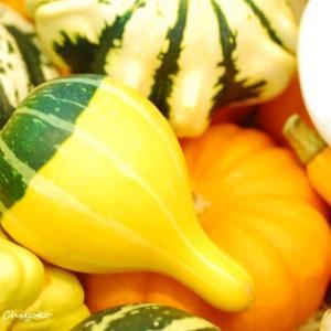 コーディネートに秋の色を取り入れた秋色コーデ
