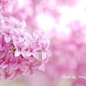 花を咲かせるタイミング 願いが叶うタイミングはひとそれぞれ