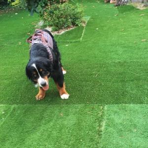 シニア犬用のスロープ