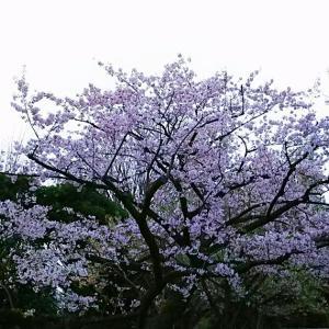 満開の桜でAreaers14年目となる新年度スタート!~つながることで、次世代への希望を~