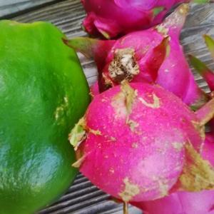 自家栽培の果実と朝食サンド。