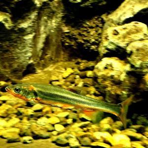 さいたま水族館:個人的に主な目的の中流編