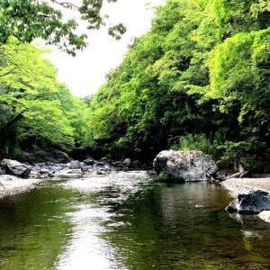 森林浴と初釣り