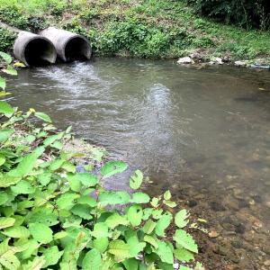 濁流で諦めて小川で小物釣り