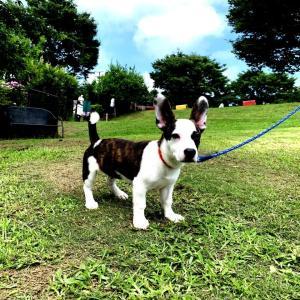 コロ助:名犬牧場へ初遠征