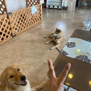 そうだ、ドッグカフェに行こう