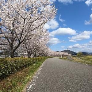 ソーシャルディスタンシングな龍野、桜見物