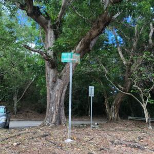 グアムの歴史を感じれるハイキングコースでは、色んな発見があります!!! sella Bay