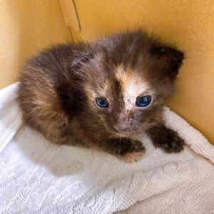 グアムで子猫を保護した件!!!
