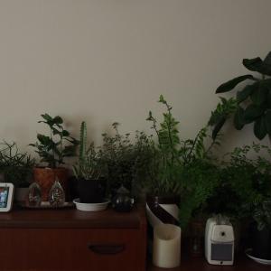 仲間入りの植物とお買い物つづき