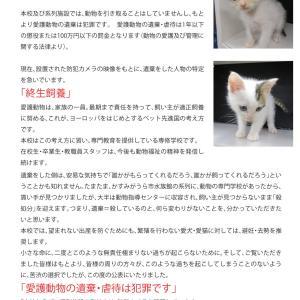 愛護動物の遺棄・虐待について