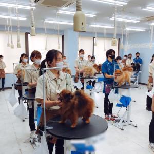 日本動物専門学校協会(NAVA)認定トリマー3級ライセンス実技試験