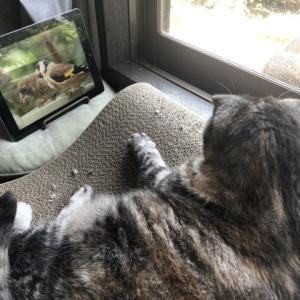 「猫の好きな動画」をYouTubeで見る猫