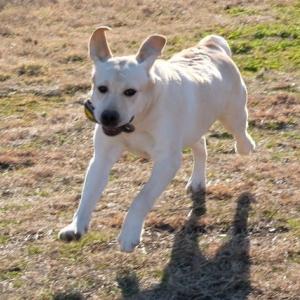 ☆☆☆ 犬の身体は人が作って健康を維持する義務がある...