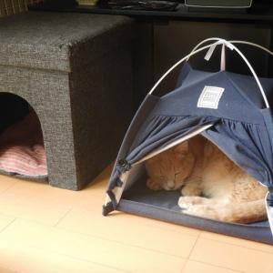 猫ちゃんテント買ってみた