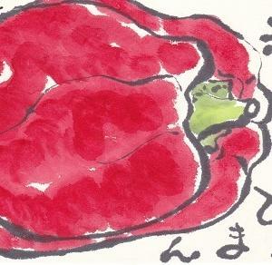 赤いピーマン「完熟すると赤くなる」