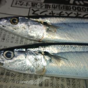 かわいい秋刀魚で小さな秋を堪能♪