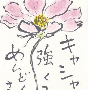 コスモス「最後まで美しく咲いていた」「華奢で強くてメンドクサイ」