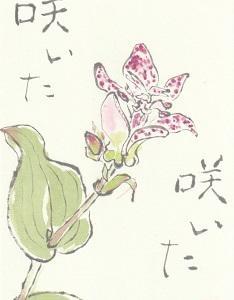 ホトトギス「咲いた 咲いた」
