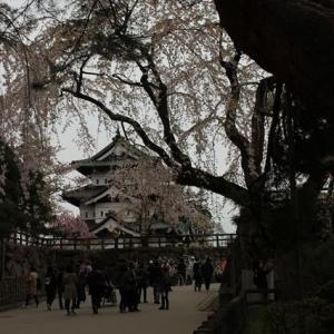 桜の城、弘前城
