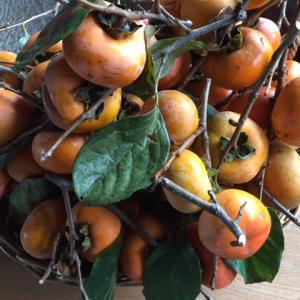 塩田平の庭・干し柿