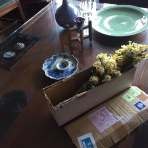 水仙の花が届きました。