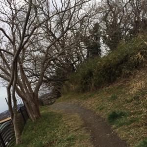 北鎌倉は大島桜の花が咲きはじめました。