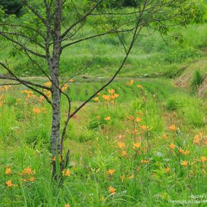 Big244 Camera Works / Fukushima Landscape