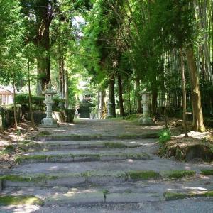 国造神社 手野の大杉