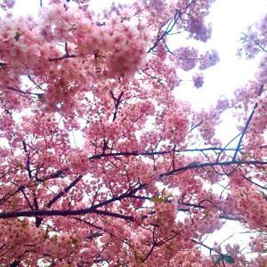 イクスピアリ桜☆