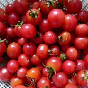 ペテトマトを使ってケチャップ