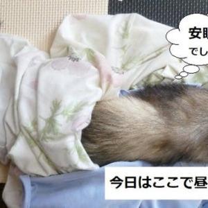 洗濯妨害(:_;)