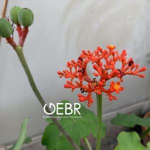 """本州では考えられない """"南国で開花するトロピカルな花々"""""""
