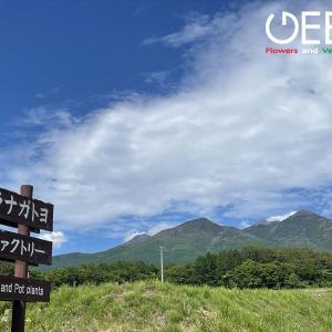 肌寒い八ヶ岳高原