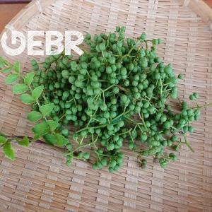 山椒の実を収穫