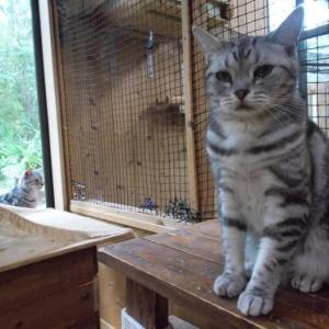 コレット「牝猫」