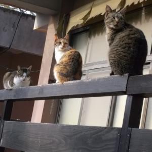アンダスンと猫