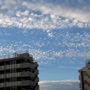 今朝は秋を感じる雲