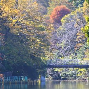 秋の武蔵関