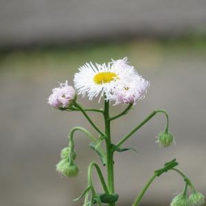 普段見慣れた草花